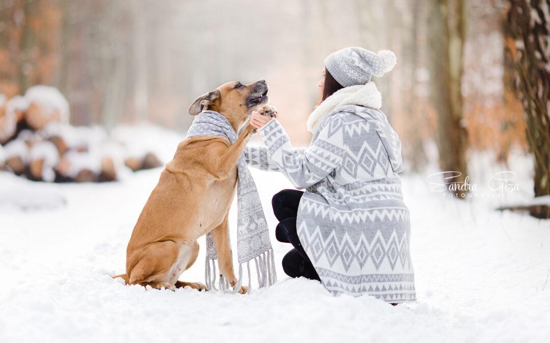 Projekt Fotograficzny – Pies w Gdyni